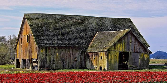 Tulip Barn One by Rick Lawler