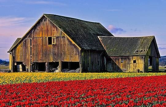 Tulip Barn Two by Rick Lawler