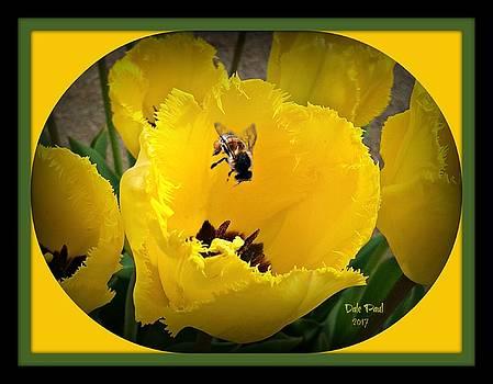 Tulip Bee by Dale Paul