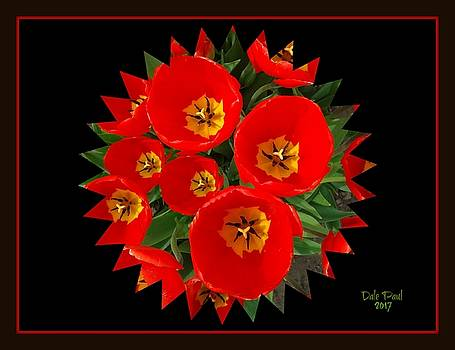 Tulip Burst by Dale Paul