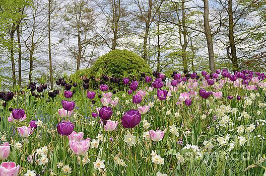Tulip Dance, Keukenhof, Holland by Sinisa CIGLENECKI