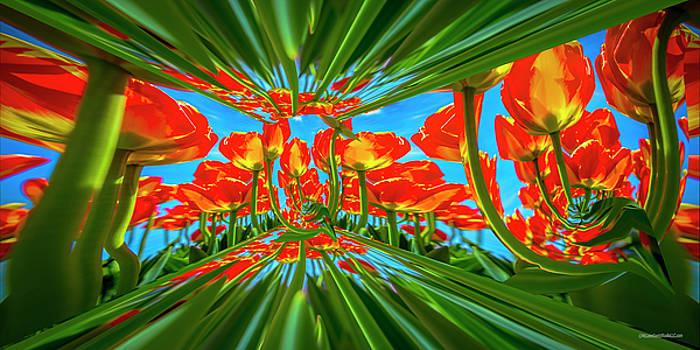 Tulip Dimensions by LeeAnn McLaneGoetz McLaneGoetzStudioLLCcom
