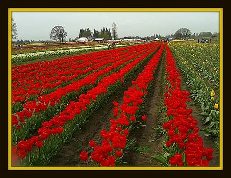 Tulip Farm by Dale Paul