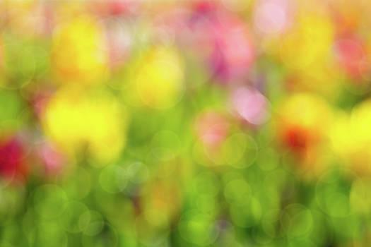 Tulip Flowers Field Blurred Defocused Background by David Gn
