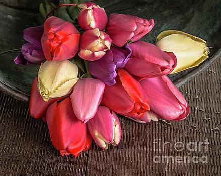 Tulip Flowers Glow by Edward Fielding