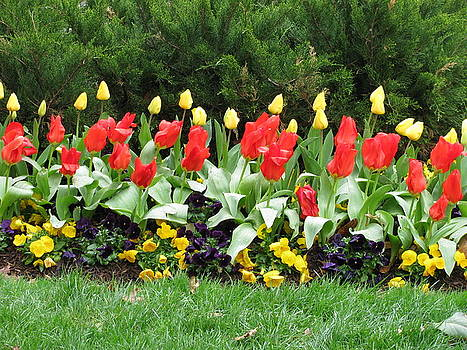 Tulip Garden by Camera Candy