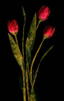 Marsha Tudor - Tulip Garden I