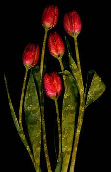 Marsha Tudor - Tulip Garden II