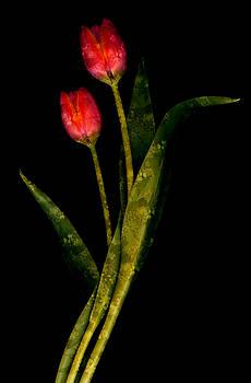 Marsha Tudor - Tulip Garden III