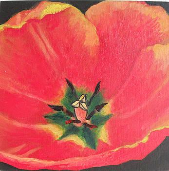 Tulip  by Grace Matthews