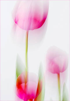 Tulip Impressions  by Diane Fifield