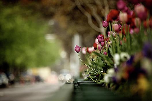 Tulip Lean by Patrick Biestman
