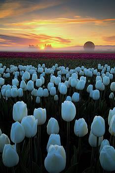 Tulip Magic by Vincent James
