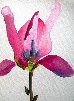 Tulip Magnolia by Sacha Grossel
