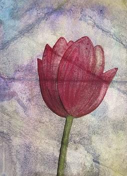 Tulip by Mary Ellen Frazee