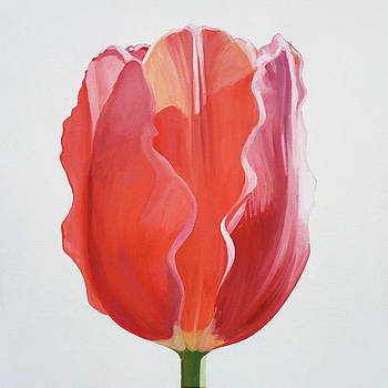 Tulip On White #3 by Kathy Armstrong