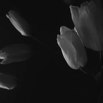 Tulip service by Marcus Hammerschmitt