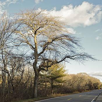 Tupelo Tree by Frank Winters