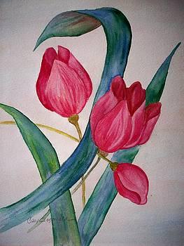 Tulip Tulip by Cary Singewald