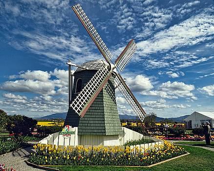 Tulip Windmill by Rick Lawler