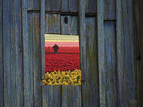 Tulip Window by Rick Lawler
