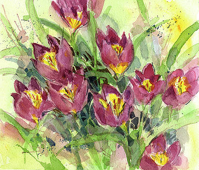 Tulipa by Garden Gate