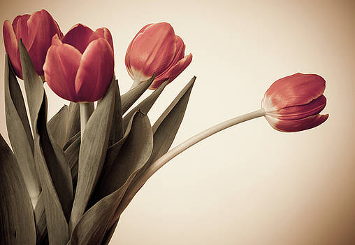 Tulips 2 by Leah Dore