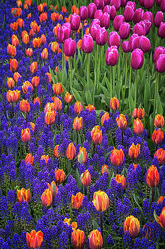 Tulips and Blue Hyacinths by Roger Mullenhour