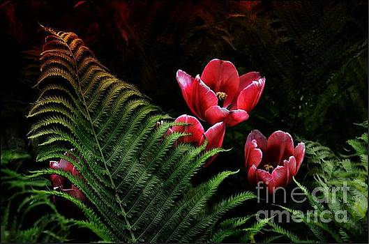 Tulips and Fern  by Elaine Manley