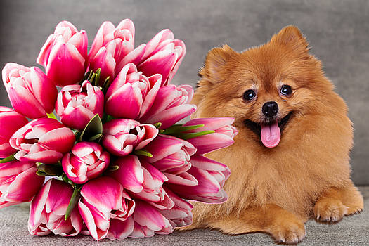 Tulips and me by Cynthia Leaphart