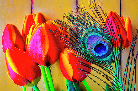 Tulips And Peacock Feather by Garry Gay