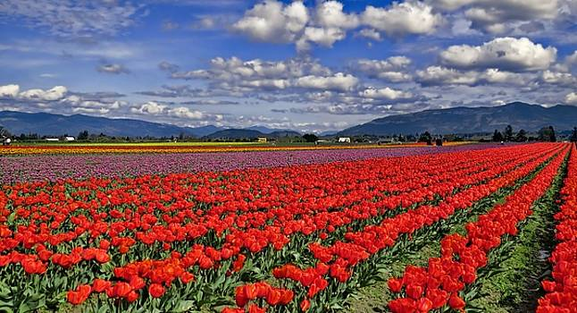 Tulips and Sky by Rick Lawler