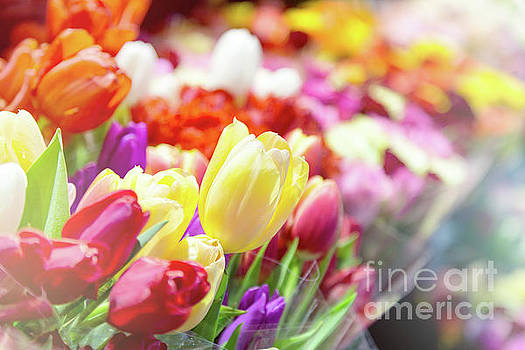 Tulips at a flower market by Jane Rix