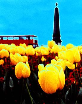 Tulips at Lambeth Bridge by Steve Bisgrove