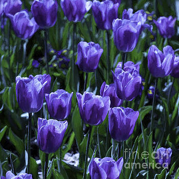 Tulips  by Bill Baer