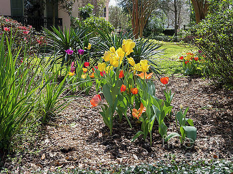 Tulips bloom in a garden of a mansion in the Garden District New Orleans by Louise Heusinkveld