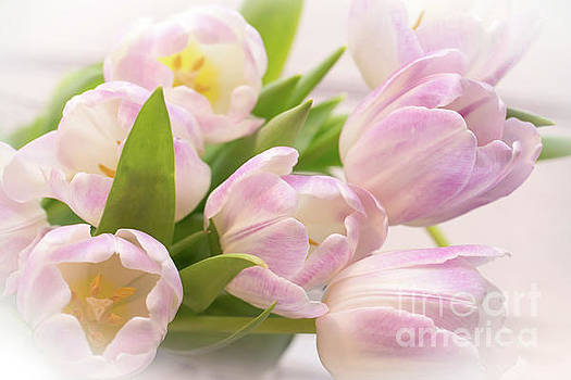 Tulips bouquet by Delphimages Photo Creations