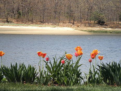 Tulips By The Bay by Kate Gallagher