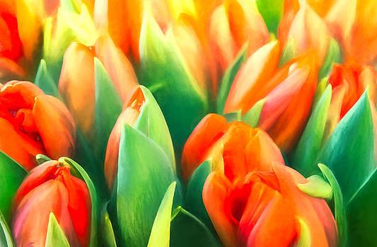 Tulips by Cindy Grundsten