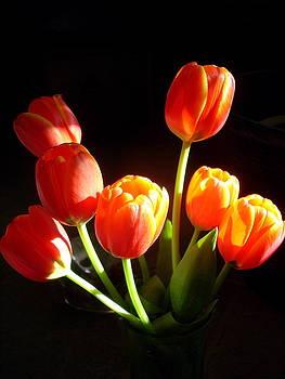 Tulips by Debby Mittelman