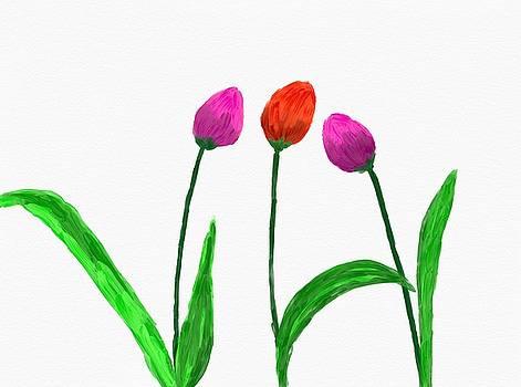 Tulips by Ed Berlyn