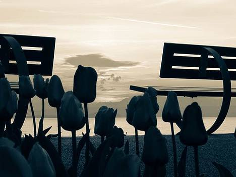 Tulips Flowers by Cesar  Vieira