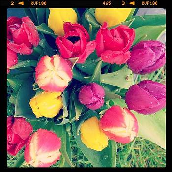 Tulips For A Spring Afternoon by Jennie Davies