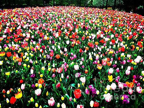 HELGE - Tulips