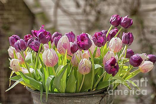 Patricia Hofmeester - Tulips in a bucket