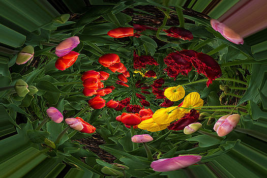 Rick Strobaugh - Tulips in a Sphere