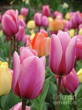 Tulips in Pastel Palette by Rebecca Overton