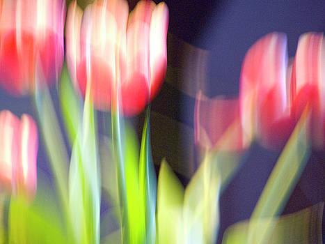 Heiko Koehrer-Wagner - Tulips in the wind