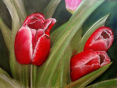 Tulips by Joan Mansson