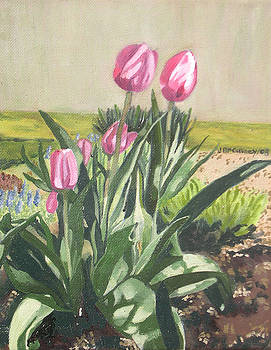 Tulips by Joan McGivney